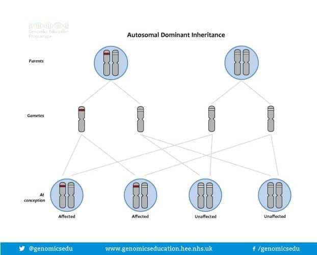 Autosomal DNA Inheritance image