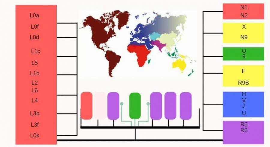 Maternal-Haplogroup.jpg