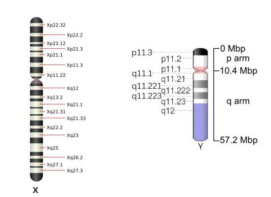 Paternal-Haplogroup-2.jpg