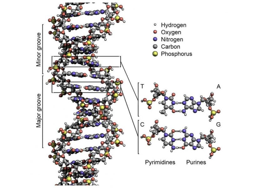 What-is-DNA-1.jpg
