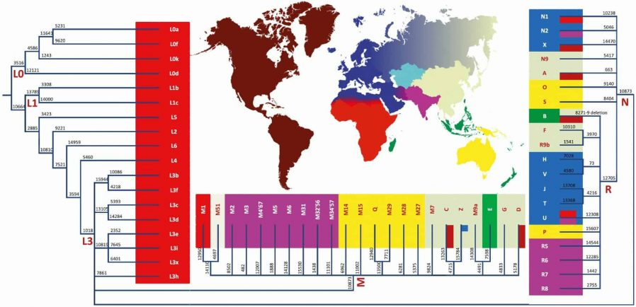 mtDNA haplogroup distribution image